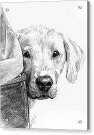 Puppies And Wellies Acrylic Print by Sheona Hamilton-Grant