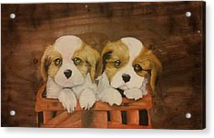 Puppies In A Basket Acrylic Print by Terrence Lewis