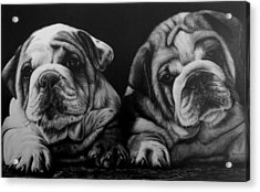 Puppies Acrylic Print by Jerry Winick