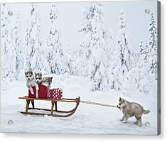 Puppies With A Sled Full Of Christmas Acrylic Print by Per Breiehagen