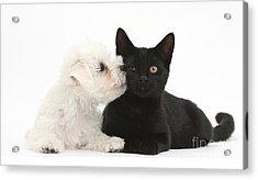 Puppy & Kitten Acrylic Print by Mark Taylor