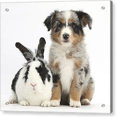 Puppy & Rabbit Acrylic Print