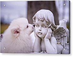 Puppy And Angel  Acrylic Print by Bonnie Barry