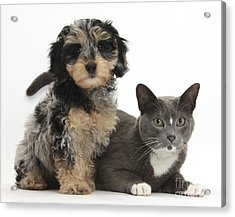 Puppy And Cat Acrylic Print