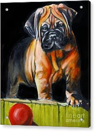 Puppy And Her Red Ball Acrylic Print