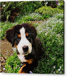 Puppy Art - Little Lily Acrylic Print