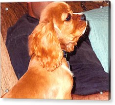 Puppy At Attention Acrylic Print by Barb Baker