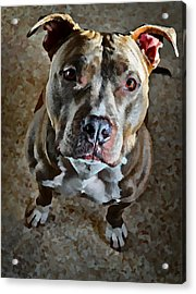 Puppy Eyes Acrylic Print