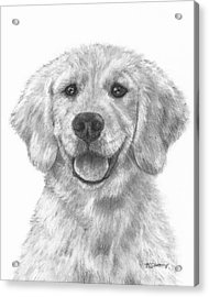 Puppy Golden Retriever Acrylic Print