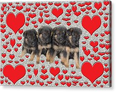 Puppy Love Acrylic Print by Aimee L Maher Photography and Art Visit ALMGallerydotcom