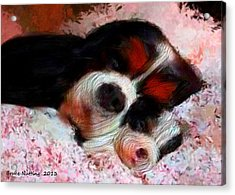 Puppy Love Acrylic Print by Bruce Nutting