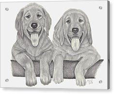 Acrylic Print featuring the drawing Puppy Love by Patricia Hiltz