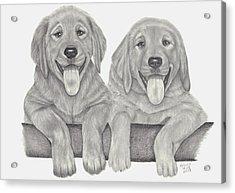 Puppy Love Acrylic Print by Patricia Hiltz