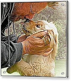 Puppy Love Acrylic Print by Richard Farrington