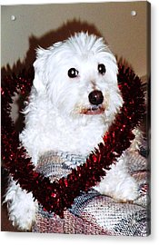 Puppy Love Valentine Acrylic Print by Eddie Eastwood
