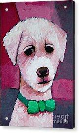 Puppy Acrylic Print by Lutz Baar