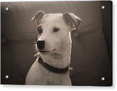 Puppy Portrait Acrylic Print by Carolyn Ricks