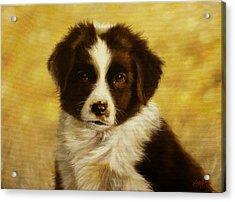 Puppy Portrait Acrylic Print by John Silver