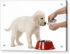 Puppy Receiving Medicine Acrylic Print by Jean-Michel Labat