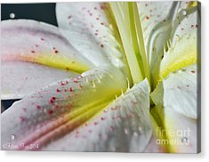Pure And Fragrant Acrylic Print