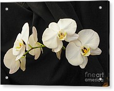 Pure And Simple Acrylic Print by Carolyn Bistline