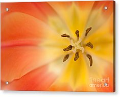 Pure Bliss Acrylic Print by Beve Brown-Clark Photography