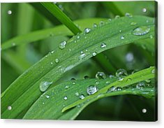 Acrylic Print featuring the photograph Pure Green by Julie Andel