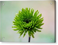 Acrylic Print featuring the digital art Pure Green by Linda Segerson