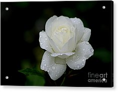 Pure Heaven Acrylic Print by Living Color Photography Lorraine Lynch