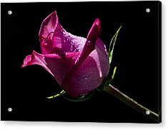 Acrylic Print featuring the photograph Pure Pink by Doug Norkum