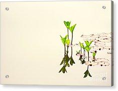 Pure Water Acrylic Print