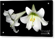 Pure White Easter Lilies Acrylic Print by Rose Santuci-Sofranko