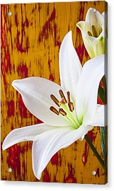 Pure White Lily Acrylic Print by Garry Gay