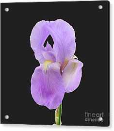 Purple Iris Acrylic Print by Scott Cameron