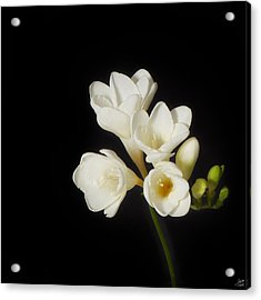 Acrylic Print featuring the photograph Purity   A White On Black Floral Study by Lisa Knechtel