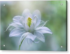 Purity Acrylic Print