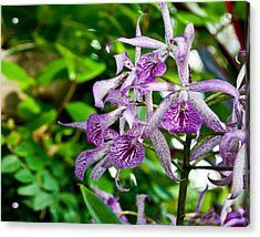 Purple And Green Pla 501 Acrylic Print