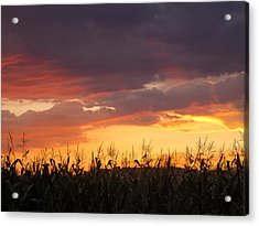 Purple And Maize Acrylic Print by Sarah Boyd
