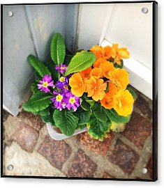 Purple And Orange Flowers Acrylic Print