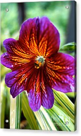 Purple And Orange Acrylic Print