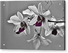 Purple And Pale Green Orchids - Black And White Acrylic Print