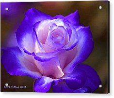 Purple And Pink Rose Acrylic Print by Bruce Nutting