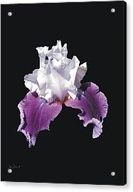 Purple And White Bearded Iris Acrylic Print