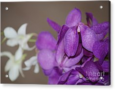 Purple And White Acrylic Print