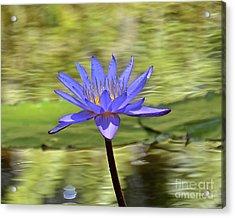 Purple Beauty Acrylic Print by Carol  Bradley