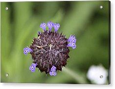 Purple Beauty Acrylic Print by Luna Curran