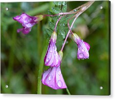 Purple Bells Acrylic Print by Bishopston Fine Art