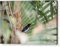 Purple Birs In Trees Acrylic Print