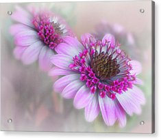 Purple Blooms Acrylic Print by David and Carol Kelly
