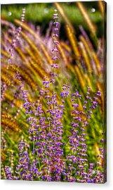 Purple Blooms Acrylic Print by Kathi Isserman